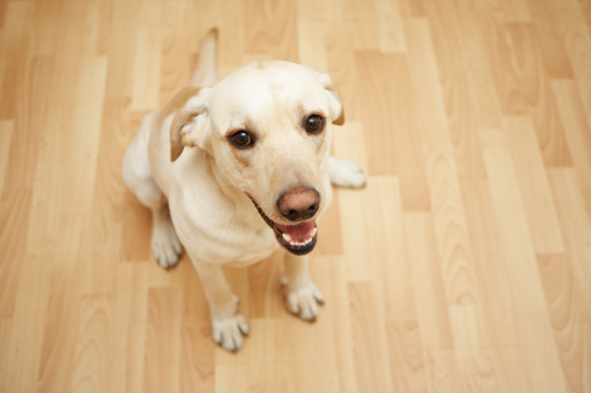 A Homeowner's Guide to Dog-Friendly Flooring