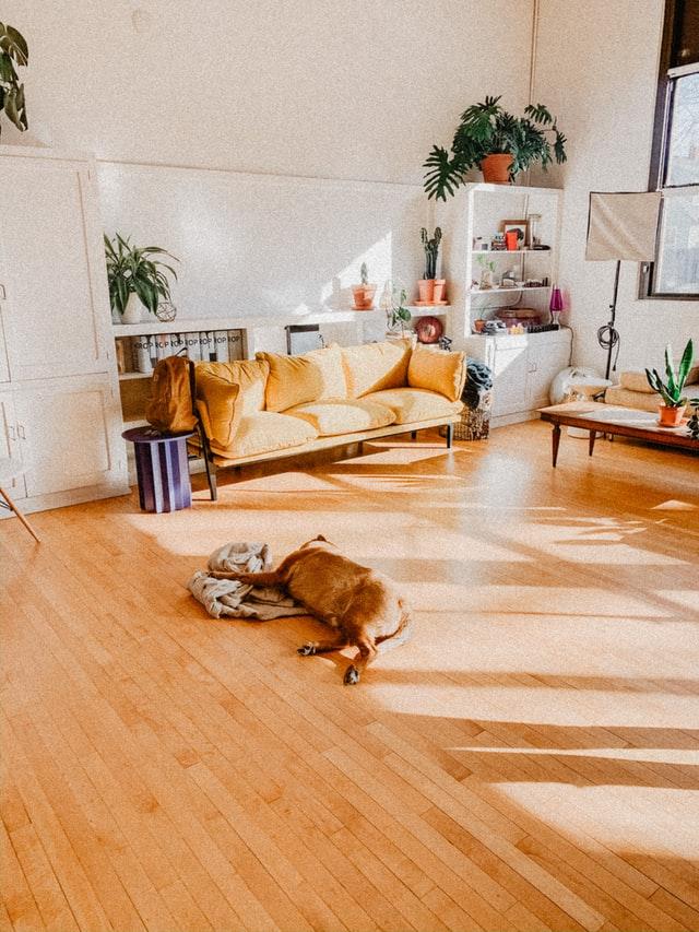 Stylish living room with laminate flooring