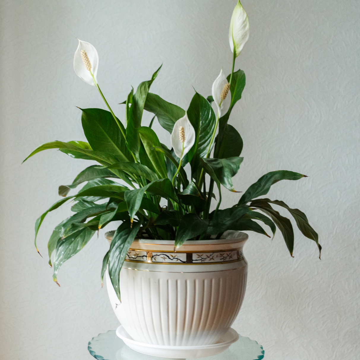 Peace lily on table